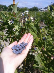 mmm... blueberries!