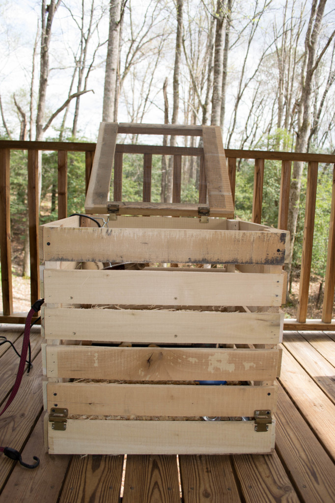 Crate for chicks